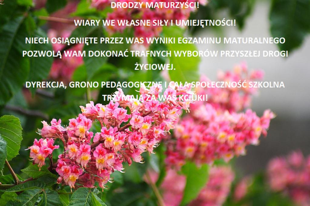 zycz_mat