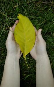 Patrycja Wydmańska Dłonie są krajobrazem serca